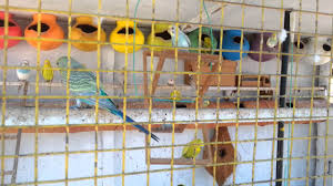 how to make a colour full love birds cage youtube