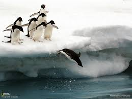 penguin hd wallpapers free download penguin pictures hd