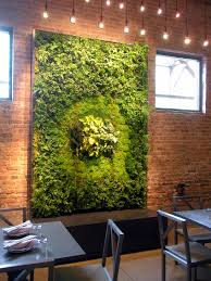 green walls living walls vertical gardens wall gardens