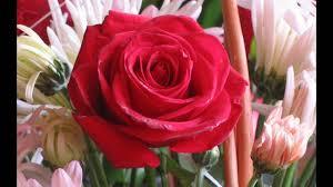 flowers roses roses flower