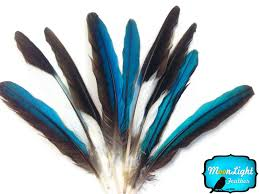 moonlight feathers 10 pieces blue kingfisher small wing feathers bat cave