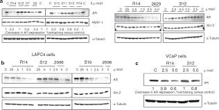 antisense 2 u2032 deoxy 2 u2032 fluoroarabino nucleic acid 2 u2032f ana