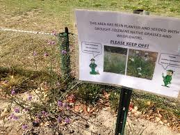 planting native grasses tilden park exceeds goals in cutting its water usage u2014 berkeleyside