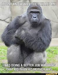 Funny Gorilla Memes - harambe not pokemongo justwarningyou iwinbitch memes