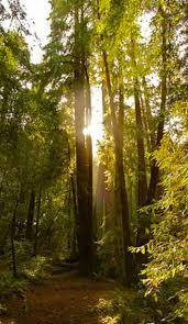 Muir Woods Map The Top Reasons Why You Should Visit Muir Woods National Monument
