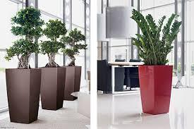 plante verte bureau offres location plantes vertes bureaux bac design cubico votre