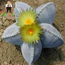 200pcs cactus succulent organic ornamental indoor seeds bonsai