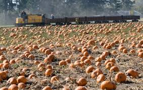 Roloffs Pumpkin Patch In Hillsboro Or by Pumpkin Patches In Washington County A Comprehensive List And