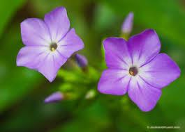 a purple flower in nebraska photograph scenic landscape nature
