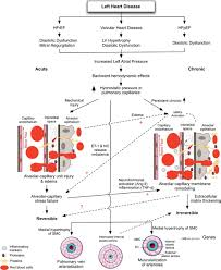 left ventricular dysfunction with pulmonary hypertension