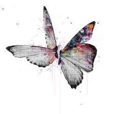 veebee butterflies signed print
