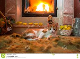 red cat is basking by the fireplace in the cozy room stock image
