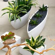 entrancing modern ideas pots indoor kitchen planters with green