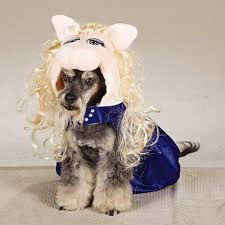 dog costumes spirit halloween 47 halloween costumes for your dog thefashionspot