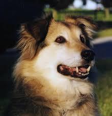 dog daycare floor plans molitor pet services pet services pet sitting dog walking