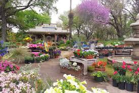 wilson landscape nursery and florist helotes and san antonio tx