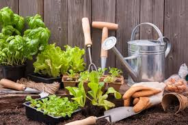 Vegetable Garden Preparation by How To Prepare A Vegetable Garden Bed