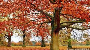 eastern kentucky fall foliage