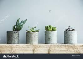 Scandinavian Room Succulents Diy Concrete Pot Scandinavian Room Stock Photo