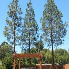 artistree tree landscape 18 reviews tree services rolando