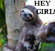 Sloth Meme Images - sloth meme dirty and funny sloth memes