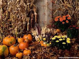 fall pumpkins wallpaper harvest scene of pumpkins pumpkin arrangement pumpkin show