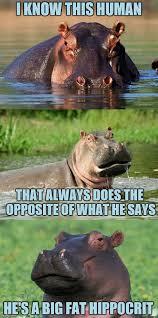 Hippo Memes - bad pun hippo memes imgflip