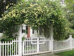 lady banks rose trellis i kind of like this overhead security