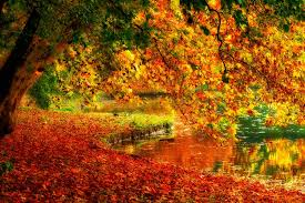 miscellaneous golden colorful fall branches mirrored tree falling