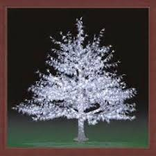 Outdoor Lighted Trees Outside Trees With Led Lights Lighting