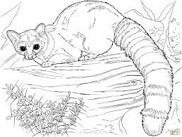 coloring pages animals baby raccoon coloring pages raccoon