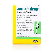 belgian shepherd for sale in malaysia amoxi drop antibiotic for dogs and cats petcarerx