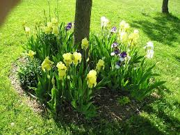 Landscaping Ideas Around Trees The 25 Best Landscaping Around Trees Ideas On Pinterest Tree