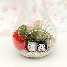 apple and pear glass vase air plant succulent terrarium by