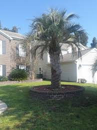 732 dragonfly drive myrtle beach sc 29579 for rent by owner frbo