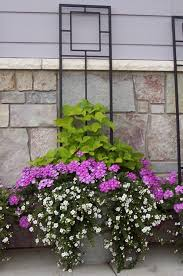 pots and pansies container garden idea creating height