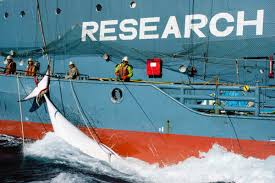 sea shepherd denied by us supreme court and ordered to pay whalers