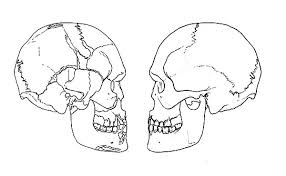 the human skull anatomi coloring pages bulk color