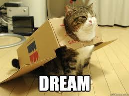 The Best Cat Memes - maru cat is best cat memes quickmeme
