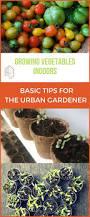 Growing Your Own Vegetable Garden by 962 Best Garden Tips Images On Pinterest Gardening Tips Urban