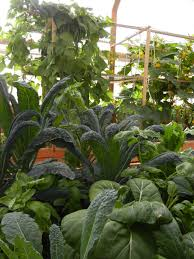 aquaponics systems must be self sustaining to feed the hungry