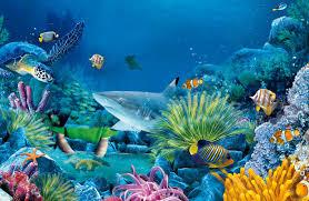 different underwater animals thinglink