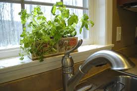 kitchen herb garden ideas kitchen interesting parsley kitchen herb garden glass slidding