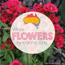 winter flowers planting guide australian temperate zones seeds