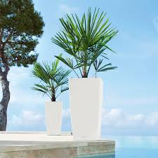 Self Watering Patio Planters by Have To Have It Square Lechuza We Have These Cubico Self Watering