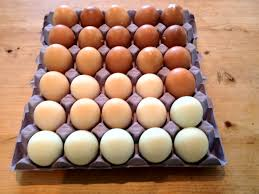 this tray of eggs from cuckoo maran brown cream legbar blue