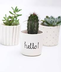 Ceramic Succulent Planter by Hello U0027 Ceramic Succulent Indoor Plant Pot By Berries For Bella