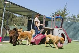 prevent your dog from escaping pets training and boarding