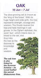 112 best celtic tree astrology images on celtic tree