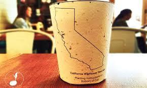plantable coffee cups grow into trees